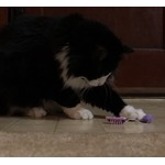 Robotic Cat Toys by HexBug