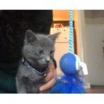 Dollar Store Cat Toys