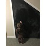 Rust Oleum Specialty Chalk Board Paint
