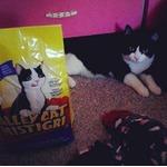 Alley Cat Food