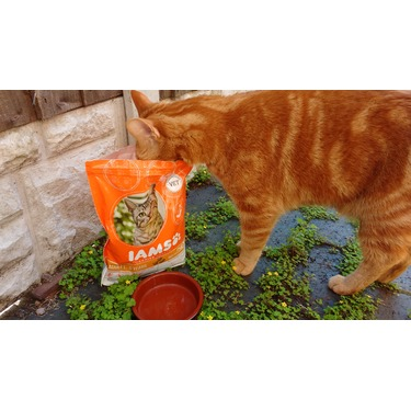 Iams Proactive Health Healthy Adult Cat Food Reviews In Cat Food