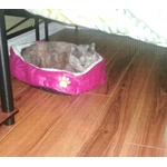 Pet Dog Puppy Cat Soft Fleece Warm Bed House Plush Cozy Nest Mat Pad