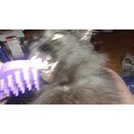 Shed away cat brush